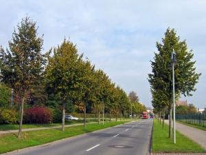 idyllic-autumn-street-scenery-1367912-m